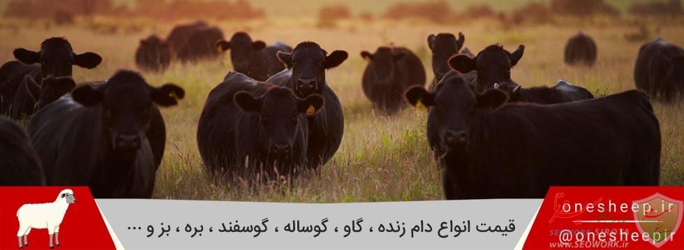 Livestock prices onesheep 1